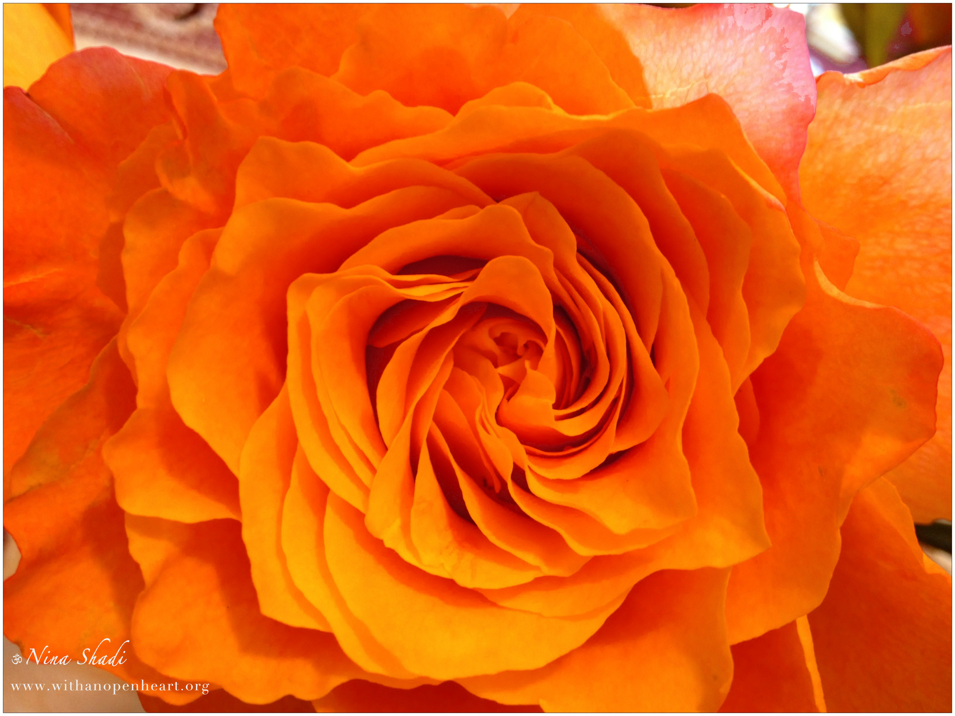 Weekly gratitude the more you recognize the beautiful for Orange colour things
