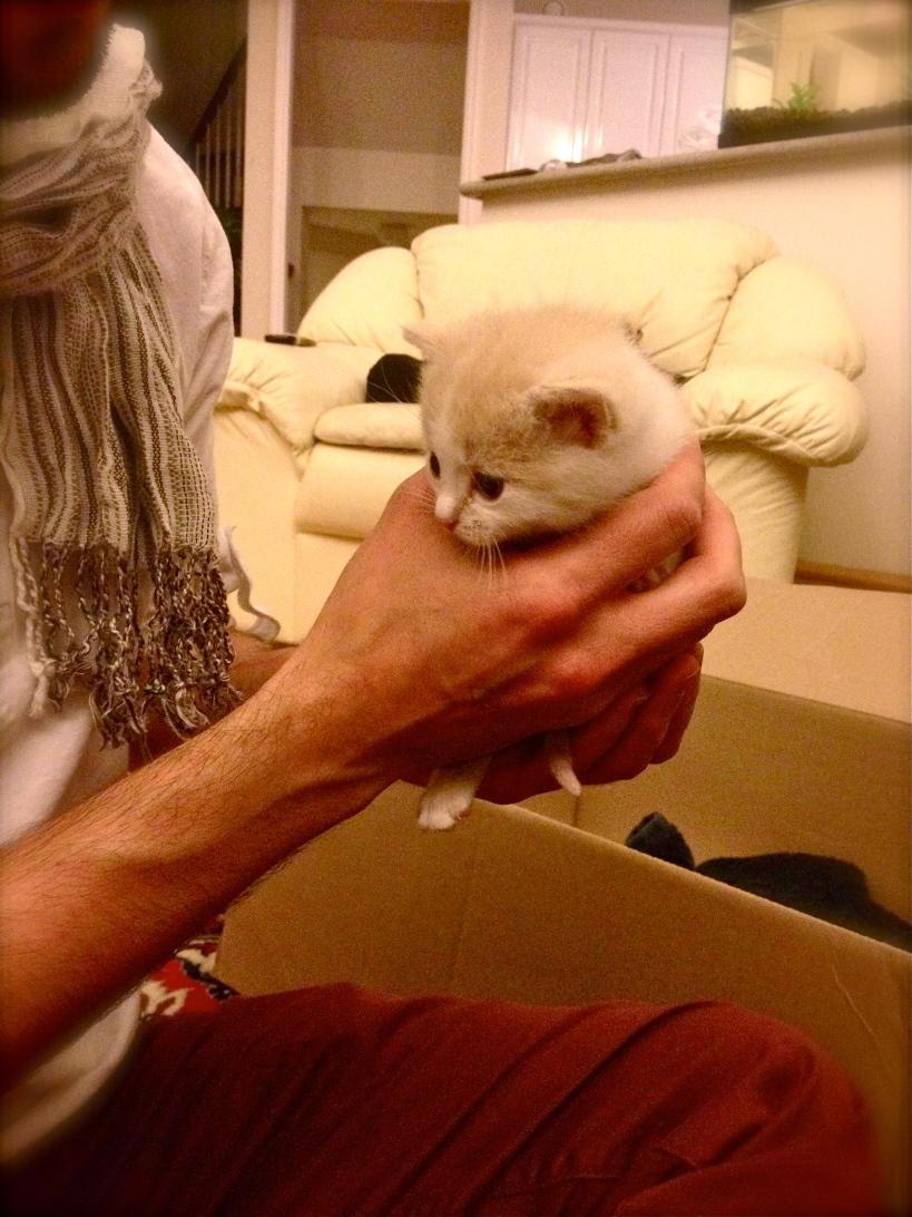 Delicate Baby Kitten
