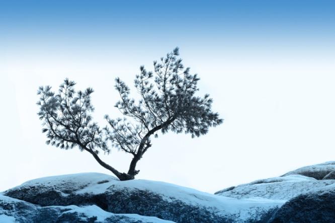 alone tree grow over blue sky on stone