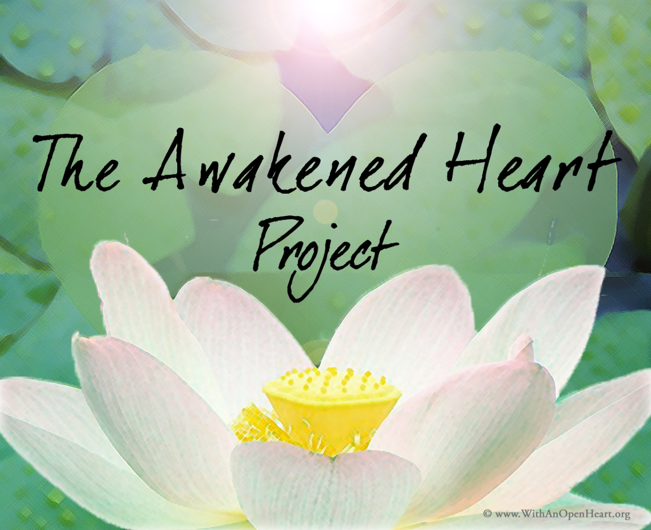 The story of the lotus flower with an open heart izmirmasajfo