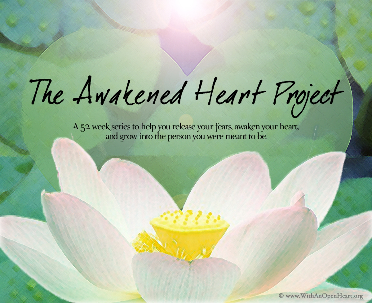 the story of the lotus flower  with an open heart, Natural flower
