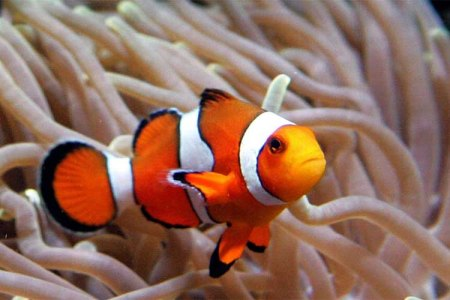 Clown Fish. Freedom. With a n Open Heart