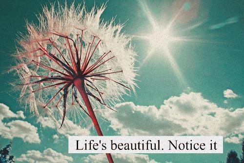 Life's beautiful notice it