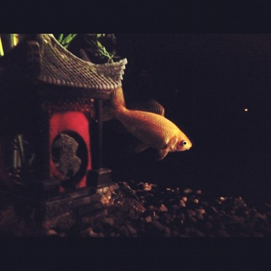 Fish Aquarium Therapy