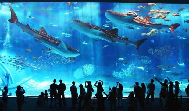 okinawa-aquarium-photograph